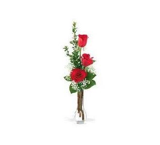 3 roses in a vase