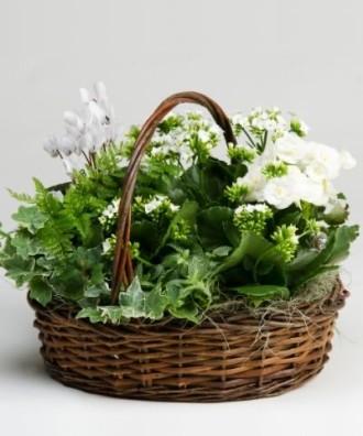mixed basket