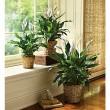 Green Plant 6