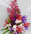 Arrangement with Orchids