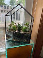 Succulent Green House