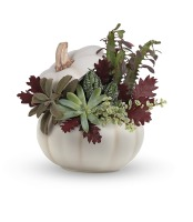 Spooky Succulent