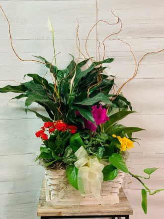 Bayport's Best Garden Blooms
