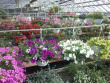 plants, hanging, baskets,