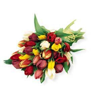 Bouquet de tulipes assorties