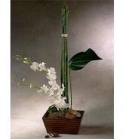 Oriental Orchid Arrangement