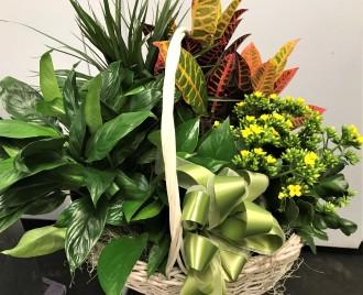 Emil Yedowitz Designed Plant Basket
