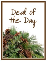 Deal of the Day Winter