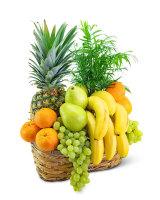 Green Goodness Fruit & Plant Basket