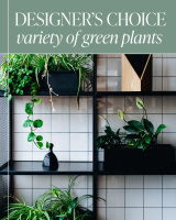 Designer's Choice - Variety of Green Plants