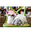 Bunny Mix