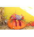 Bright Living Pumpkin