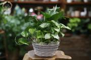 Green Plant Dishgarden