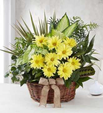 Dish Garden w/ Fresh Cut Flowers