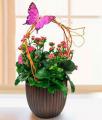 Fluttering Kolanchoe Planter