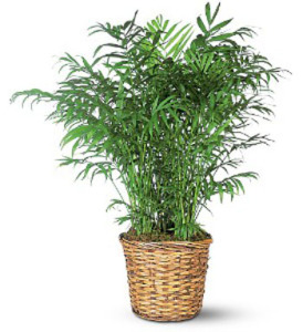 Potted Plant in Wicker Basket