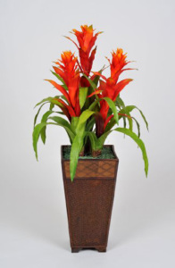 High Style Triple Bromeliad