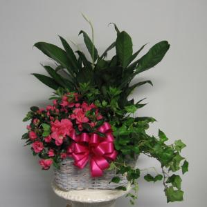 European Plant Basket