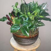 Medium Ceramic Garden
