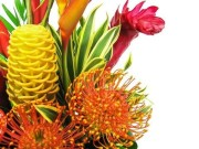Tropical Designer's Choice
