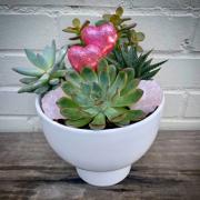Rose Quartz Succulents