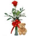 Rose and a Teddy Bear