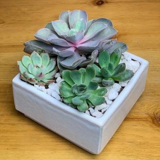 Modern Succulent Desktop Planter
