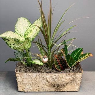 Green Plants in Rustic Birch Planter