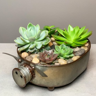 Fun Piggy Succulent Planter