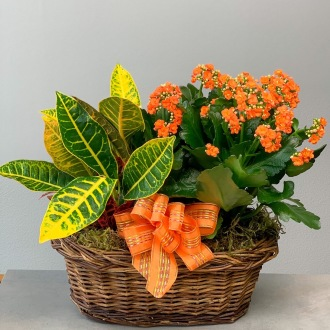Colorful Kalanchoe in Decorative Watering Can