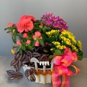 Colorspot Planter