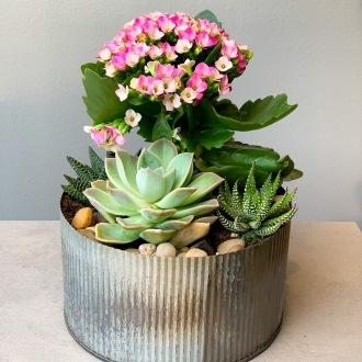 Desktop Blooming Succulent Planter