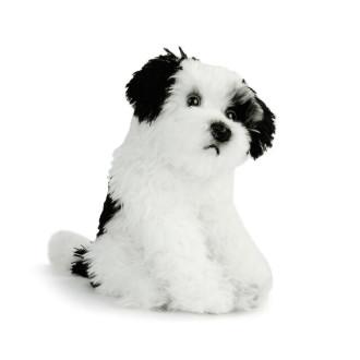 Rescue Terrier Mix