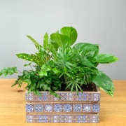 Festive Green Plant Collection