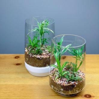 Seattle Green Plant Terrarium