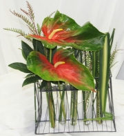 Anthurium Grid