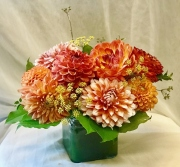 Orange Dandy Dahlia