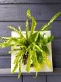 Green Goddess Wall Planter