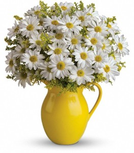 Teleflora\'s Sunny Day Pitcher of Daisies by CCF