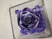 FOREVER ROSE PURPLE