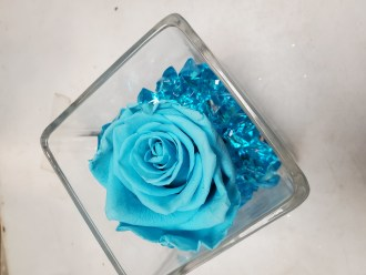 FOREVER ROSE TURQUOISE