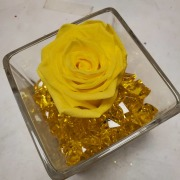 FOEVER ROSE YELLOW