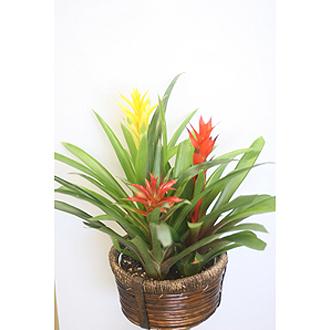 Tropical Trio Planter Basket