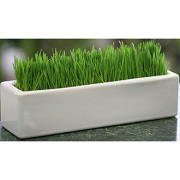 LA113 Wheatgrass Block
