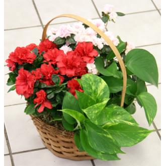 Assorted Basket Planter