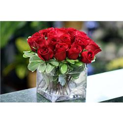 2 Dozen Red Roses Low Profile Design