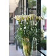 California calla lilies