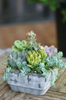 Modern Succulents Dishgarden