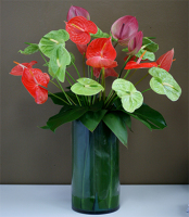 Mixed Anthuriums Arrangement