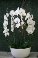 Cascade Orchid Planter